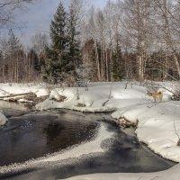 Прогулка с Туманом... :: Федор Кованский
