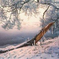 Зимний этюд :: Сергей Шабуневич
