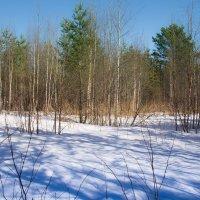 апрель на севере :: Светлана Ку