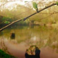 На Озере, ранний апрель :: Ольга Назаренко