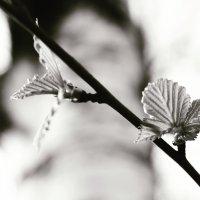 первые листья :: Nikita S