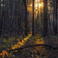 Лучик света в осеннем лесу. :: Vadim Piottukh