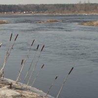 поклон реке :: Михаил Жуковский