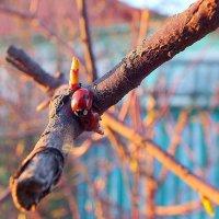 весна для божьих коровок... :: Александр Прокудин