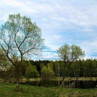 Весна :: Ольга Устинова