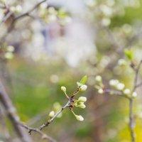 весна :: Антон Силивончик