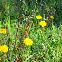 Майские травы. :: Валентина ツ ღ✿ღ