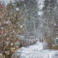 Снегопад :: Алексей Вольтов