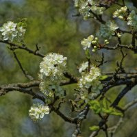Цвет апреля. :: Владимир Михеев