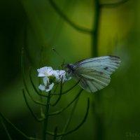 Волшебство весеннего леса... :: Julia Art
