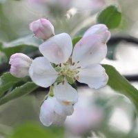 Flower_73 :: Trage