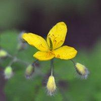 Flower_76 :: Trage
