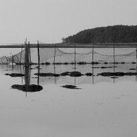 Рюжи на Белом море. :: Марина Никулина