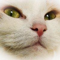 Ах этот взгляд зеленоглазый... :: Арина