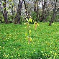 Весна... :: Валерия Комова