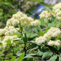 Деловитое жужжанье раздаётся там и тут. От цветка к цветку летают,соты мёдом заполняют. :: Валентина ツ ღ✿ღ