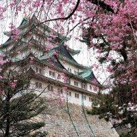 Замок Нагоя :: Swetlana V