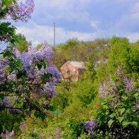 Сирень в апреле :: Леонид