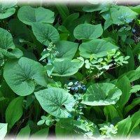 Майская зелень :: Domna Kuznechic
