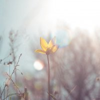 Навстречу солнцу :: Оксана Зволинская