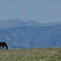 Кавказ :: Александр Попов