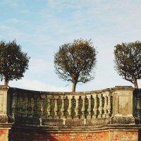 Три дерева :: Илья Тимкин