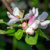 Розоватый цветок :: Юрий Стародубцев