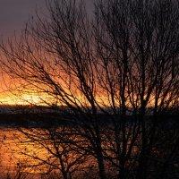 Зимний закат. :: Марина Никулина