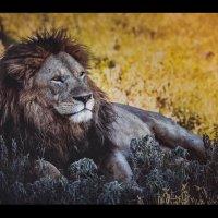 Нашедший тень...жаркая Танзания!!! :: Александр Вивчарик