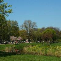 весна :: Михаил Новиков
