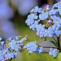Небесные цветы :: Alexander Andronik