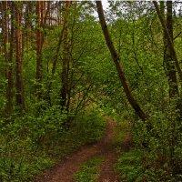 В лесу, дороженькой весенней... :: Юрий