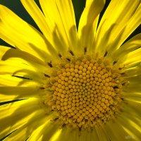 Солнечная активность :: Владимир Шамота