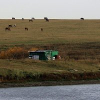 Ходят кони над рекою............. :: Валерия  Полещикова
