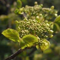 Как прекрасен мир весной... :: ТАТЬЯНА (tatik)