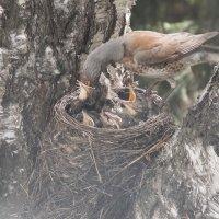 Беззаботная пора у птенцов :: Domna Kuznechic