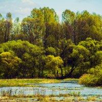 Весна у реки Остёр! :: Павел Данилевский