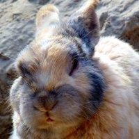 из жизни кроликов 2 :: Александр Прокудин