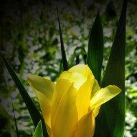 Цветочный фонарик... :: Владимир Бровко