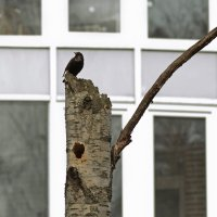 О том, как птицы прилетали... :: Nina Grishina