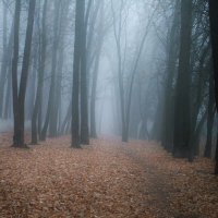 Осенний туман :: Пётр Баранов