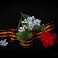 С праздником 9мая :: Оксана Романова