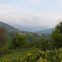 Средь гор бушует май,а до снегов рукой подать... :: Людмила Богданова (Скачко)