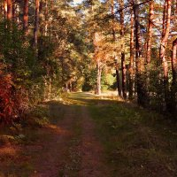 Иду лесом :: Виктор (Victor)