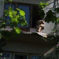 Печаль снесённых домов :: Виталий Шимко