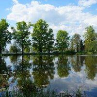Деревья в воде :: Фролов Владимир Александрович