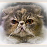 Перс3-из серии Кошки очарование мое! :: Shmual Hava Retro