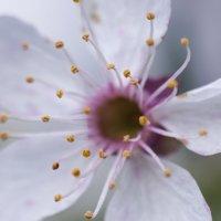 Flower_62 :: Trage