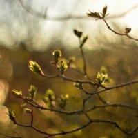 майская мелодия... #5 :: Андрей Вестмит