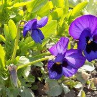 Фиолетовый цветок :: Максим Мальцев